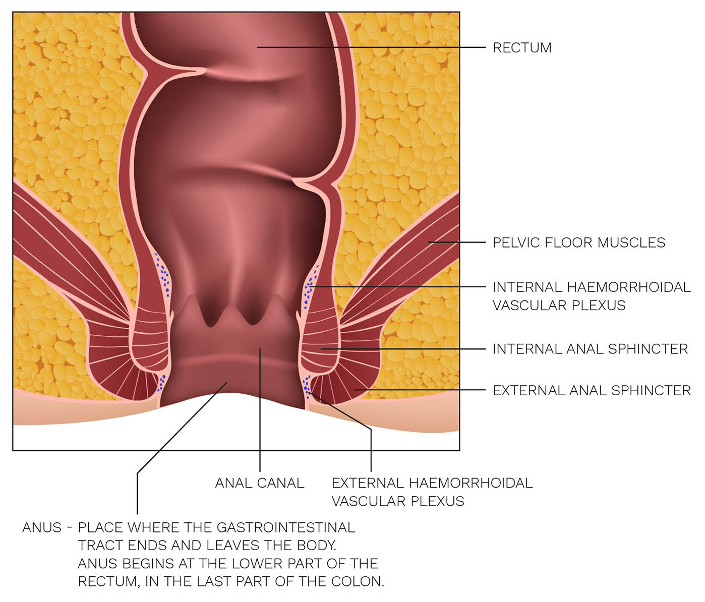 Haemorrhoids as a disease | Rectovenal